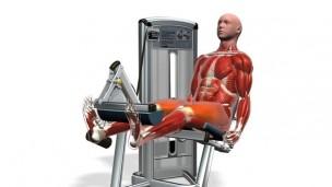 三维肌肉锻炼教程