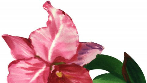 水彩花卉教程 英文