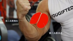 器械健身示范教程