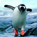 转圈的企鹅