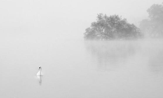 这张雾天拍摄的风景,就像水墨画一样,湖面和雾气连在一起,形成了大