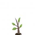 刺猬的松树